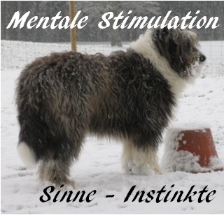 MentStimulation